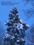 winter-moon